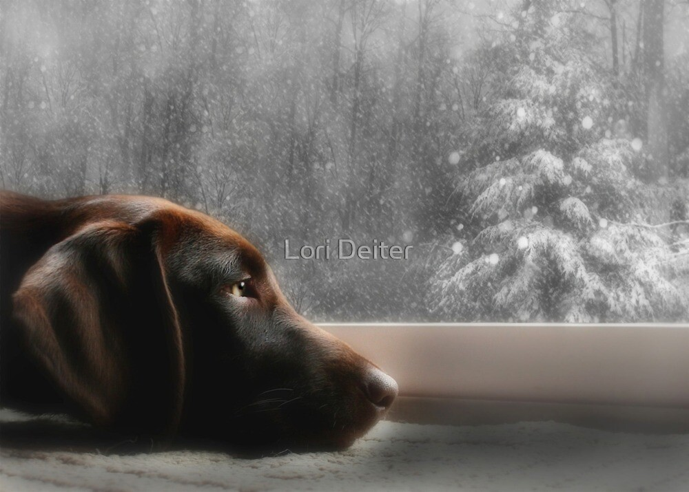 Dreamin' of a White Christmas... by Lori Deiter