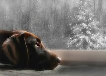 Dreamin' of a White Christmas... by Lori Deiter