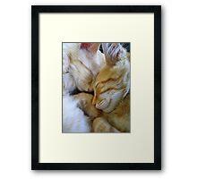Snuggle Kittens Framed Print