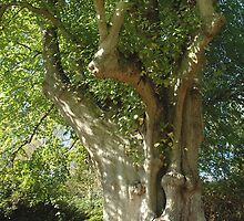 Tree by jimlad