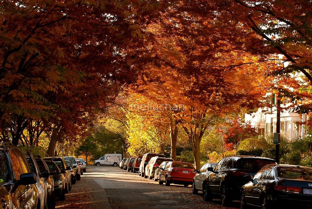 foliage in the city by mellychan