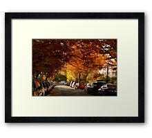 foliage in the city Framed Print