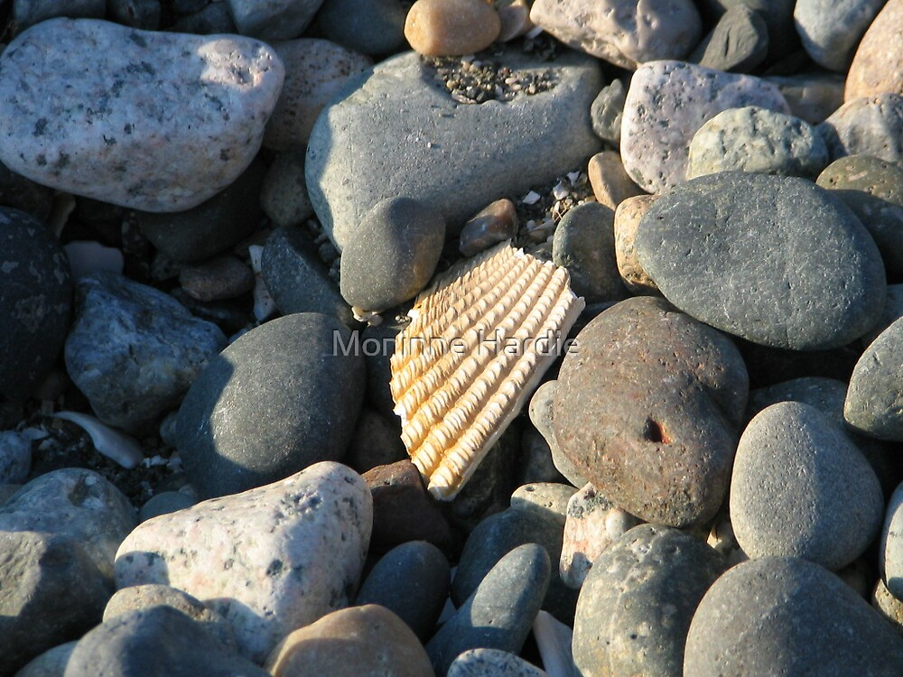 Sea Shell on Stone by Moninne Hardie