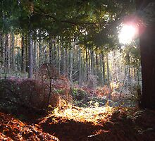 SunBeam by forestphotos