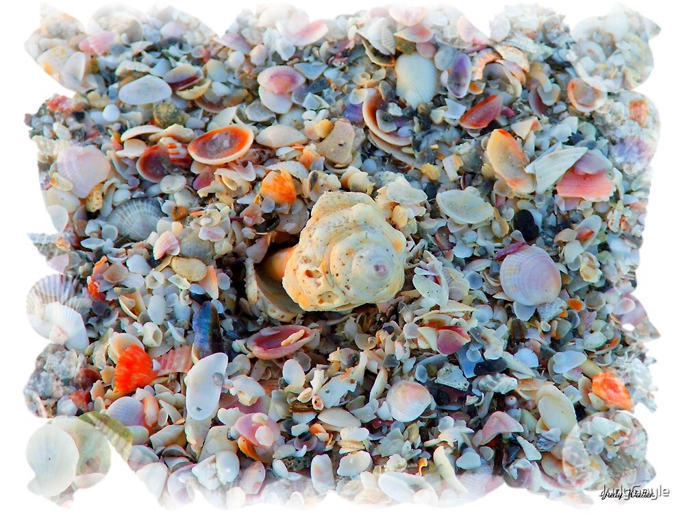 Shells by Judy Gayle Waller