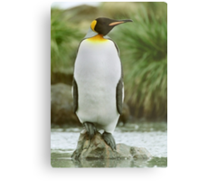 The Penguin King Metal Print