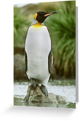 The Penguin King by Steve Bulford