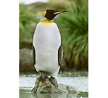 The Penguin King Photographic Print