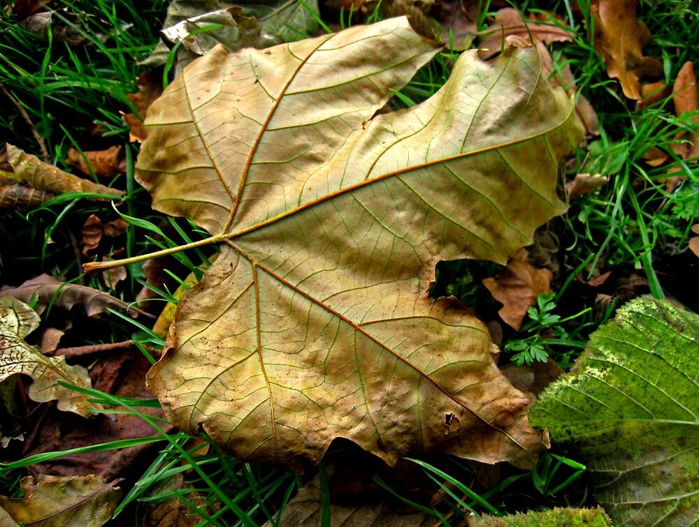 Golden leaf by benni6634