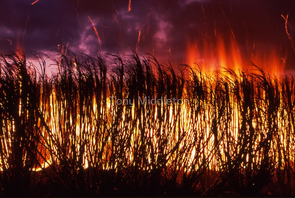 sparks fly - cane firing near Ayr, Nth Qld. by Tony Middleton