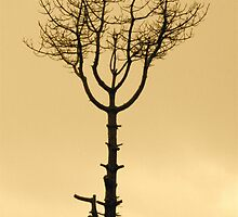 Tree or symbol by tomwhus