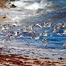 Shore Bird flight by Roslyn Lunetta
