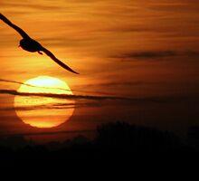 Sunrise (4) 25-11-07 by Sharon Perrett