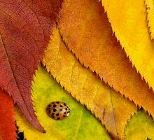 The Ladybug's Paradise by Raphael Lopez