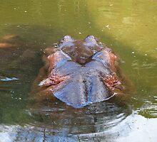 Hippo Wait by jess116