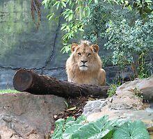 Lion by jess116