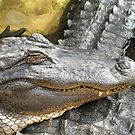 American Alligator by jess116
