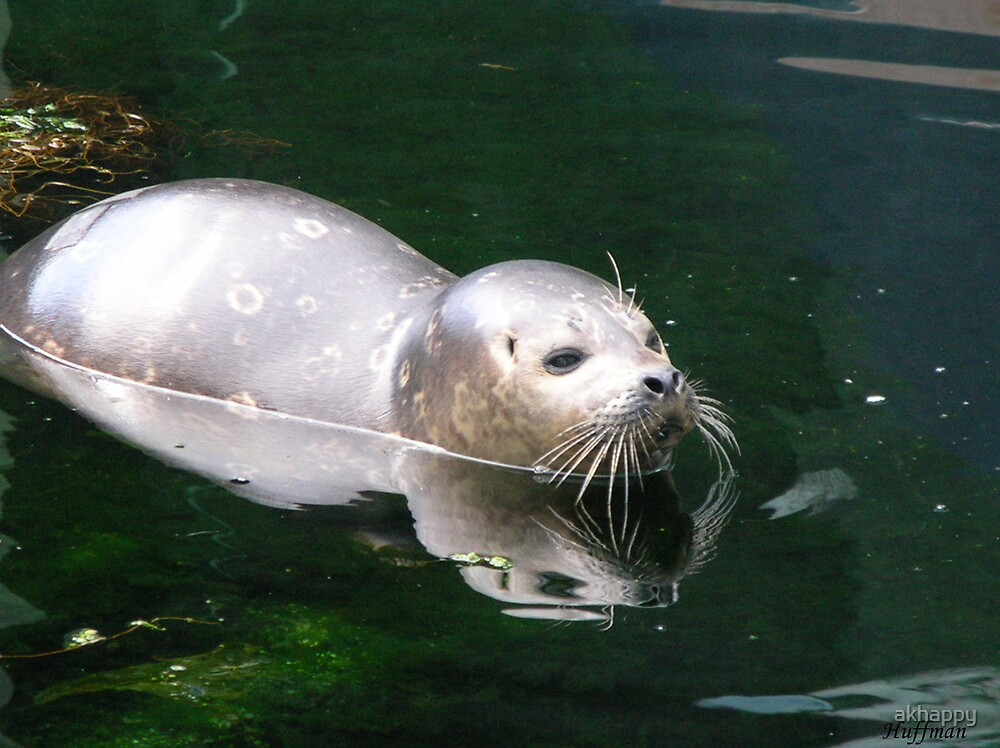 just a seal by akhappy