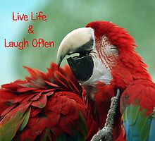 Live Life and Laugh Often by julieb1013