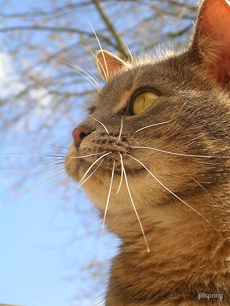 Feline Profile by jillspring