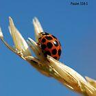 Prayer Bug by Lorraine Deroon