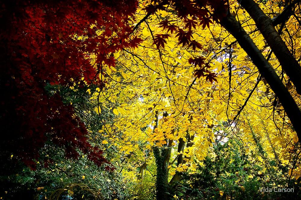autumn's color by Vida Carson