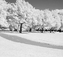 Park by PhotoNinja