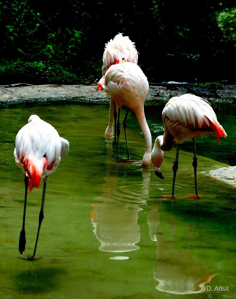 Flamingo Water Dance by J. D. Adsit