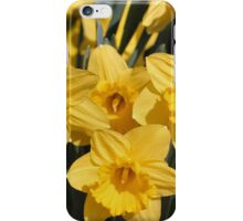 Triad Daffodils iPhone Case/Skin