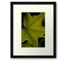 Leaf Lines Framed Print