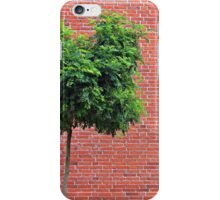 Red Bricks on a wall iPhone Case/Skin