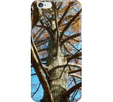 Up A Bare Tree iPhone Case/Skin