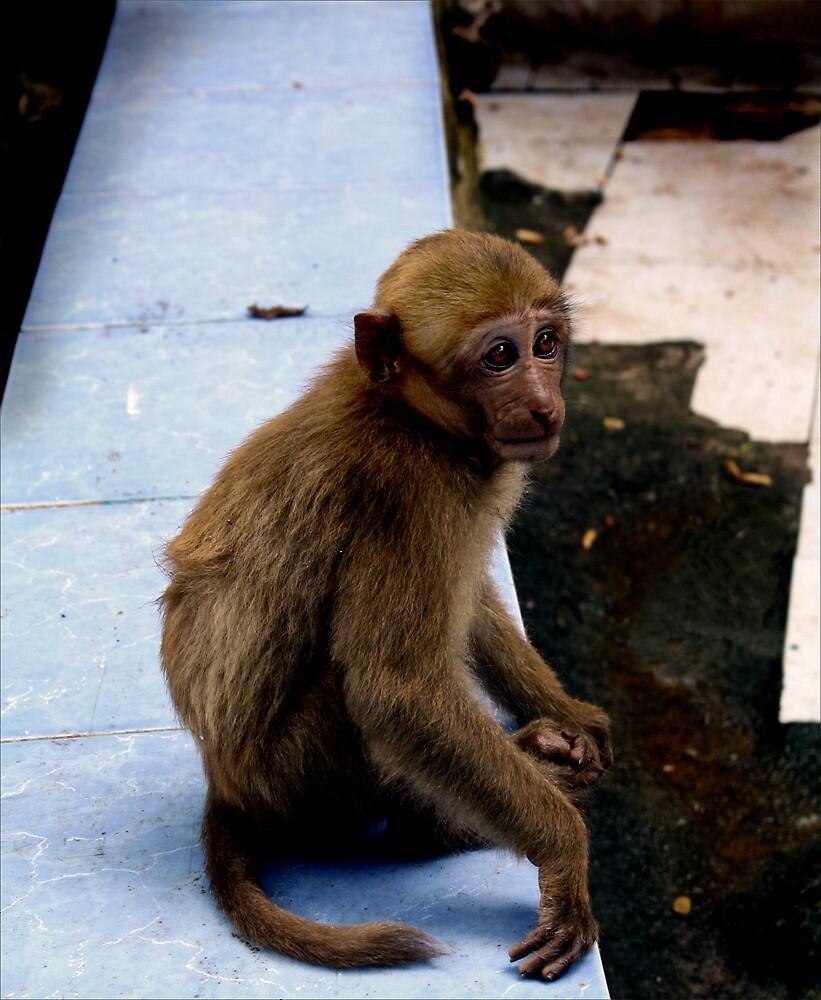 Monkey by jonlunsford