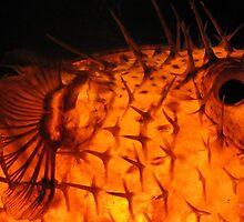 Kon Tiki by Bruce  Dickson