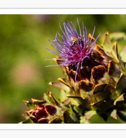 Nectar gatherer Sticker