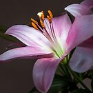 Lilly 3 by hary60