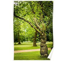 Voluptuous tree Poster