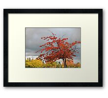 flame burst Framed Print