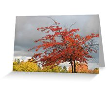flame burst Greeting Card