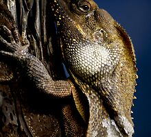 Reptilian Gaze by Kim Roper