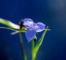 Blue Flower by foghat76