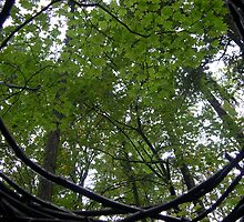 Art in the Forest by Bruce  Dickson