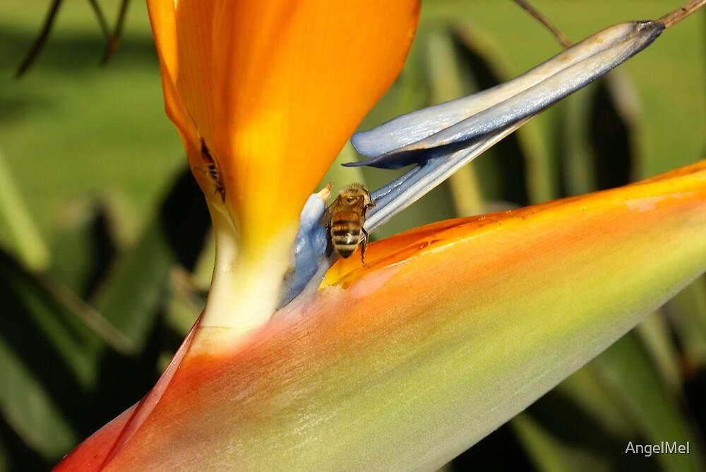 Bee & Bird of Paradise by AngelMel