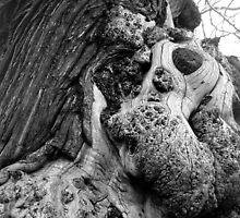 Old oak in Greenwich Park by rita flanagan