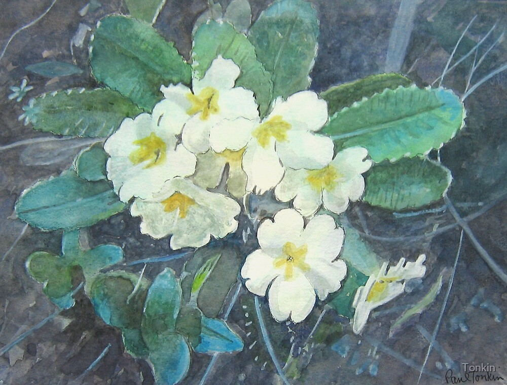 Primroses by Tonkin