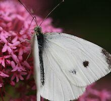 Moth Eaten by saharabelle