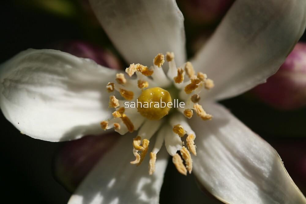 Lemon Blossom by saharabelle