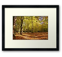 The Glade Framed Print