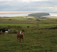 Scottish Islands by Fiona MacNab / Orcadia Images by Fiona MacNab