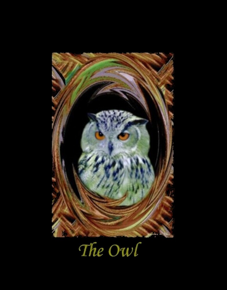 The Owl by Madeline M  Allen